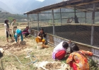 students-working-to-make-chicken-farm